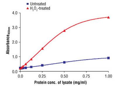 PathScan ® Phospho-AMPKα (Thr172) Sandwich ELISA Antibody Pair