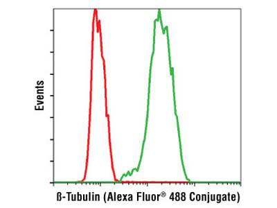 β-Tubulin (9F3) Rabbit mAb (Alexa Fluor ® 488 Conjugate)