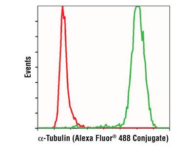 α-Tubulin (11H10) Rabbit mAb (Alexa Fluor ® 488 Conjugate)