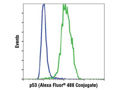 p53 (7F5) Rabbit mAb (Alexa Fluor ® 488 Conjugate)