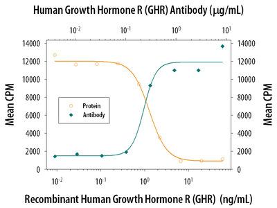 Growth HormoneR / GHR Antibody