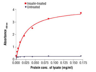 PathScan ® Phospho-Insulin Receptor β (Tyr1150/1151) Sandwich ELISA Antibody Pair