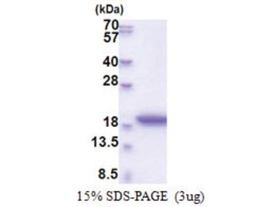 MRFAP1L1 (1-127, His-tag)