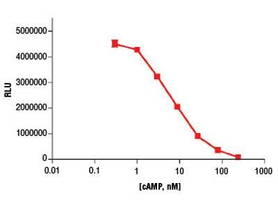 Cyclic AMP XP ® Chemiluminescent Assay Kit