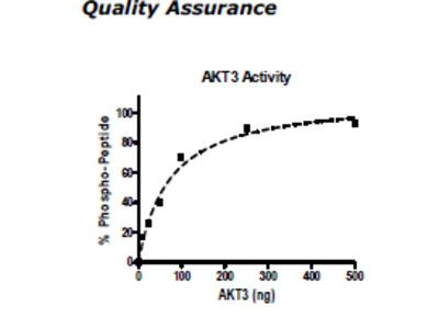 AKT3, His-tag