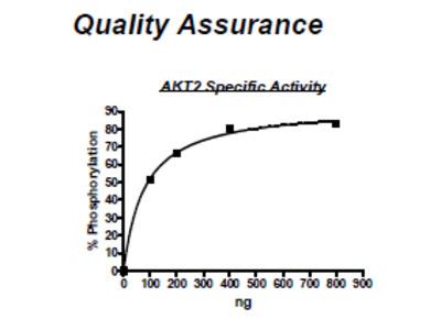 AKT2, Active, His-tag