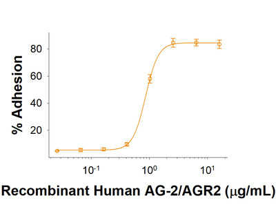AG-2 /AGR2 His-tag Protein