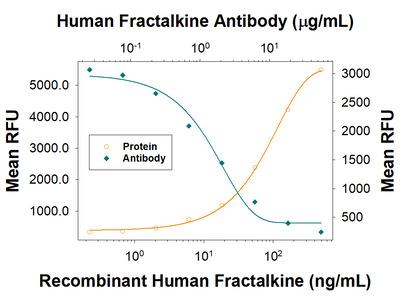 CX3CL1 /Fractalkine Antibody