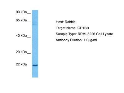 GP1BB Antibody