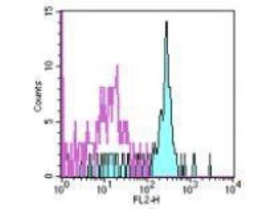 GM-CSFR alpha Antibody (4H1)