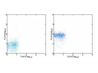 CXCR1 / IL-8 RA Antibody (8F1-1-4)