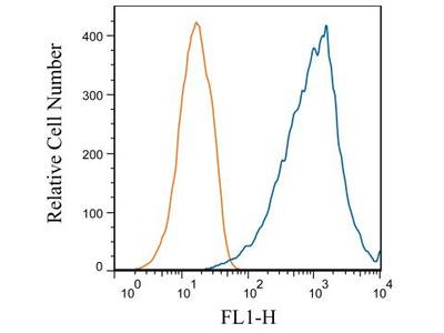 TfR (Transferrin R) Antibody (OX26)