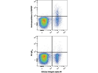 Rat Monoclonal Aminopeptidase A / ENPEP Antibody