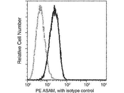 anti-CLMP Antibody