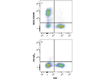 B220 / CD45R Alexa Fluor 488-conjugated Antibody