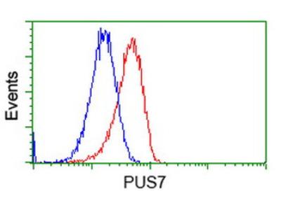Anti-PUS7 antibody [4C6]