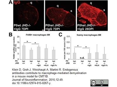 PURIFIED MOUSE IgG From Bio Rad Formerly AbD Serotec