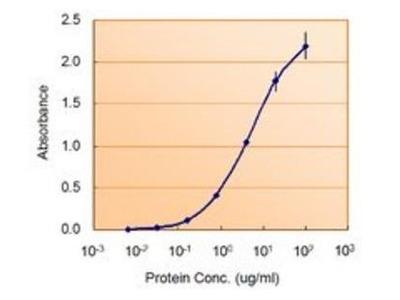 NODAL antibody
