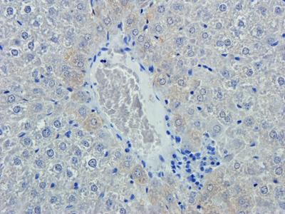 Emp1 antibody