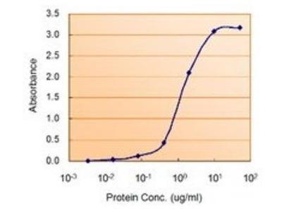 PRKAA2 antibody