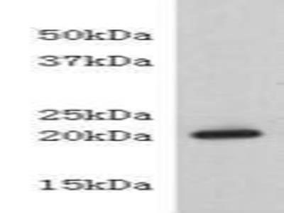 CD333 peptide