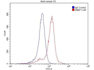 SSTR1 antibody