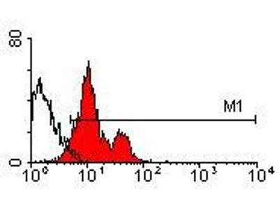 anti-ITGA4 (Integrin alpha 4) antibody