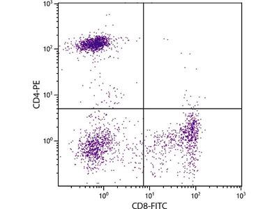 anti-CD8 (CD8 alpha) antibody