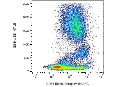 anti-CD55 antibody