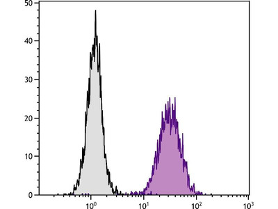 anti-ITGAV (CD51) antibody
