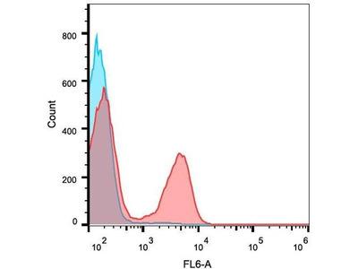 anti-CD3E (CD3 epsilon) antibody