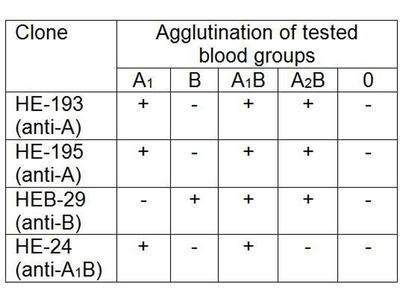 anti-Blood Group A1B antibody