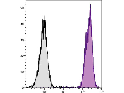anti-H-2Dd antibody