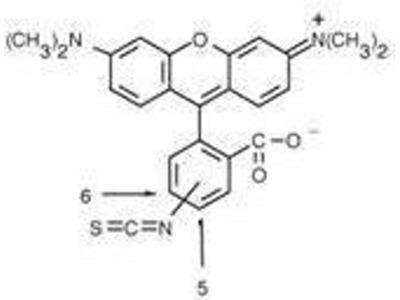 anti-Rhodamine antibody