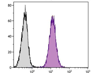 anti-LAMP1 antibody
