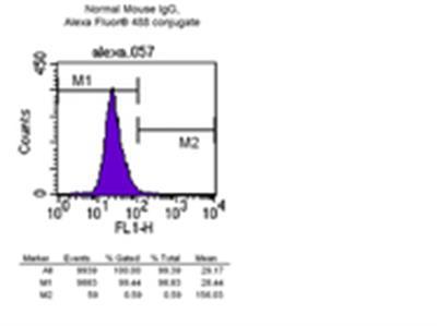 Anti-α-Tubulin Antibody, clone DM1A, Alexa Fluor® 488 conjugate