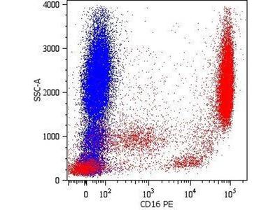 anti-GRM1 antibody