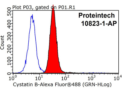Cystatin B antibody