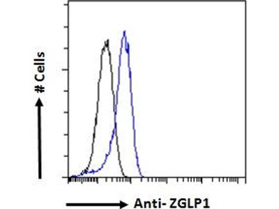 anti-Zinc Finger, GATA-Like Protein 1 (ZGLP1) antibody