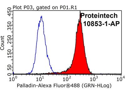 Palladin Polyclonal antibody - KD/KO Validated