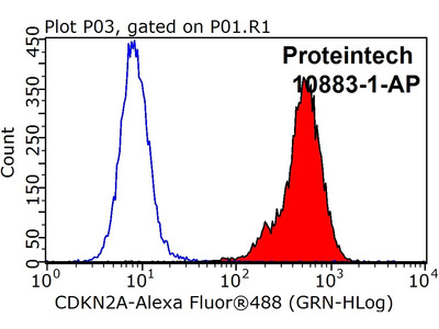 P16-INK4A Polyclonal antibody - KD/KO Validated