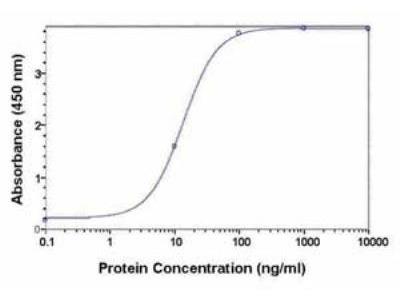 Chicken Polyclonal alpha 2-Macroglobulin Antibody