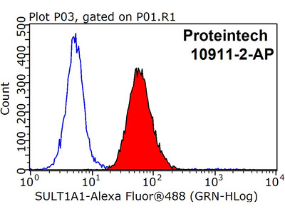 SULT1A1 antibody - KD/KO Validated