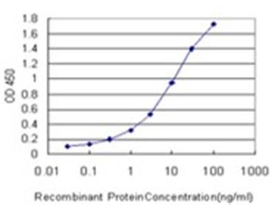 KMT2B Antibody (4C10)