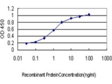 N-Deacetylase / N-Sulfotransferase 1 / NDST1 Antibody (1G10)