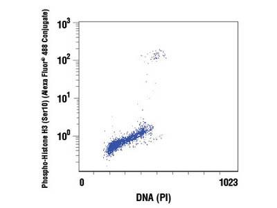 Propidium Iodide (PI)/RNase Staining Solution