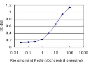 TSC22D4 Antibody (1A4)