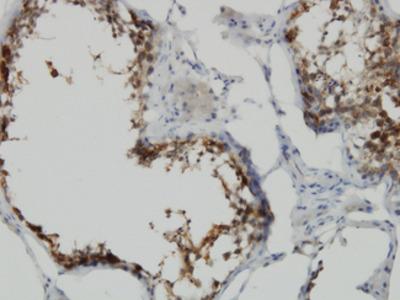 POMZP3 Monoclonal Antibody