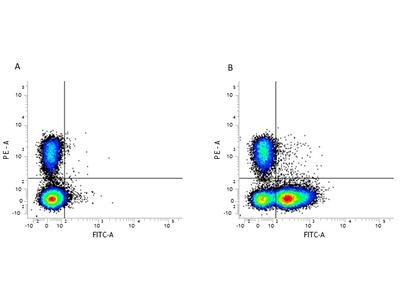 RAT ANTI MOUSE CD16/CD32:Low Endotoxin