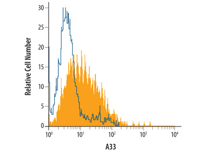A33 Antibody